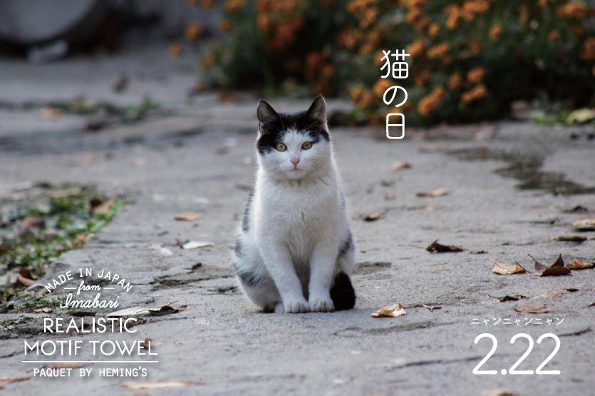2/22は猫の日