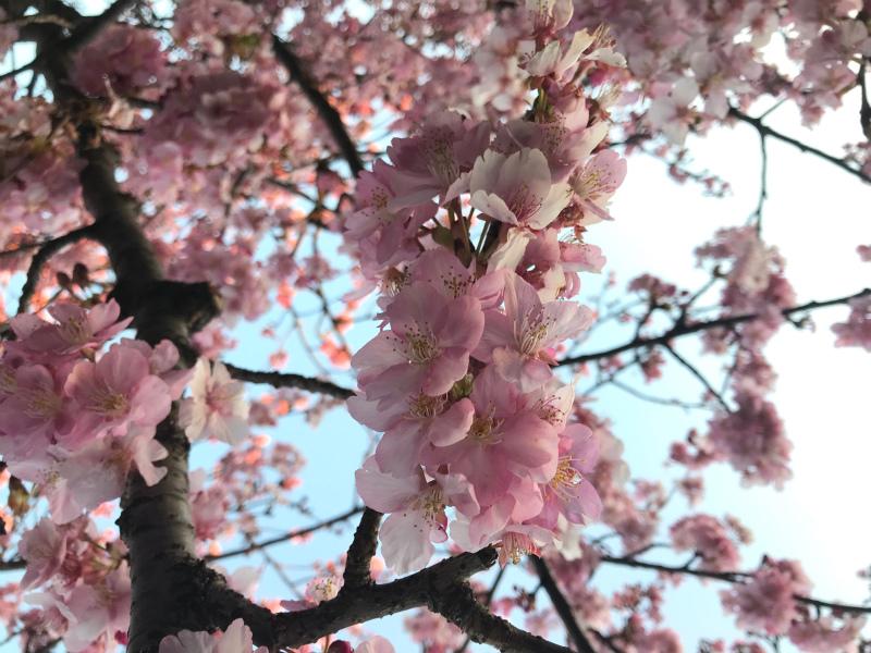 【花粉症つらい季節になりましたね・・・】