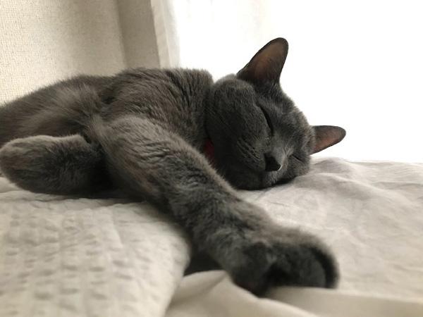 【猫のためのブランケット】