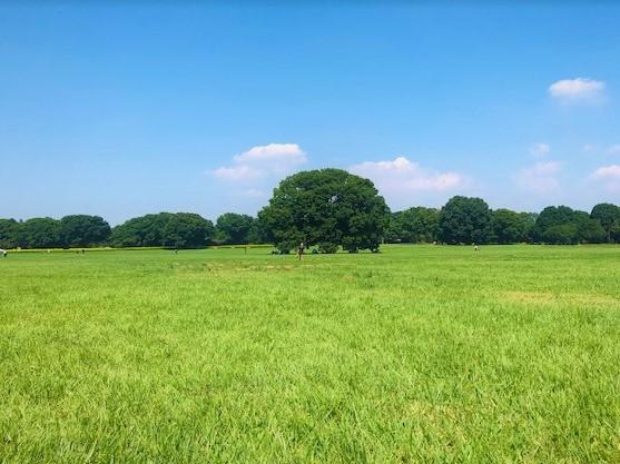 緑の草原に青い空の夏の風景